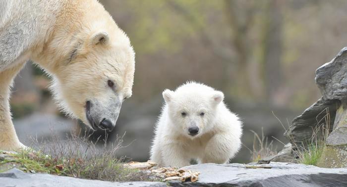 Медведь 6