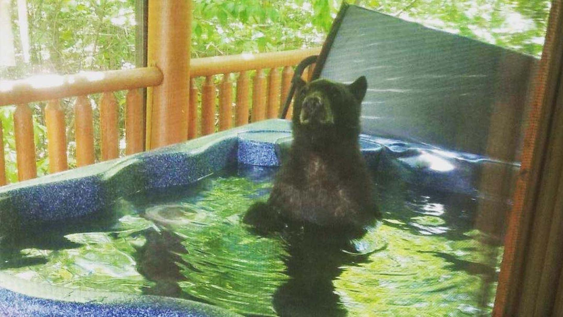 медведь_джакузи