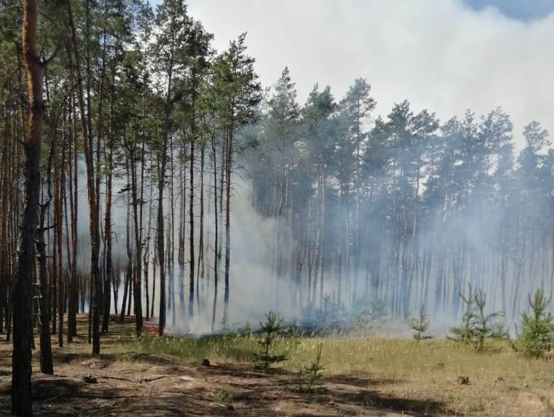 лес_пожар