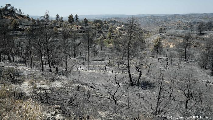 франция_лесной пожар