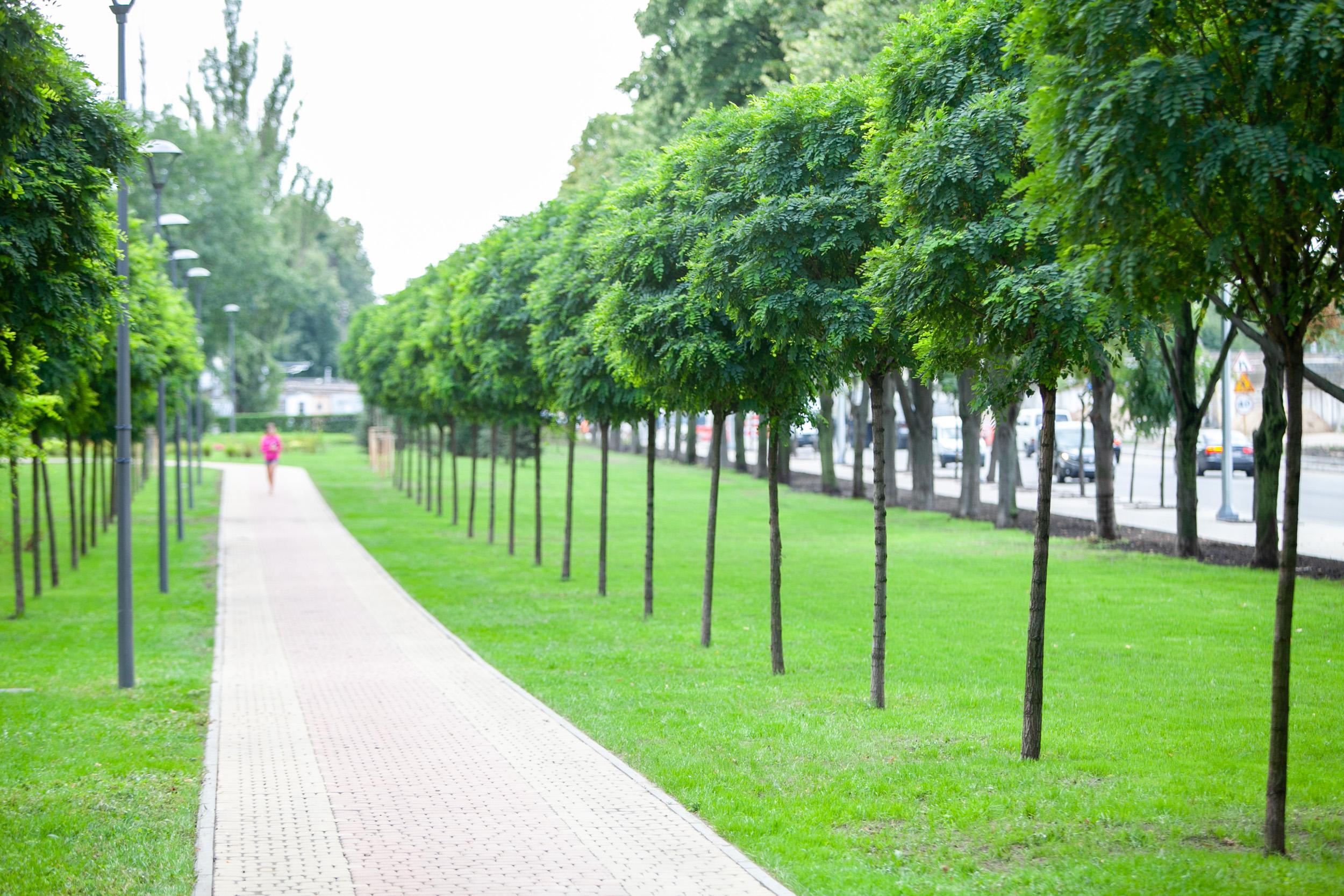 парк11