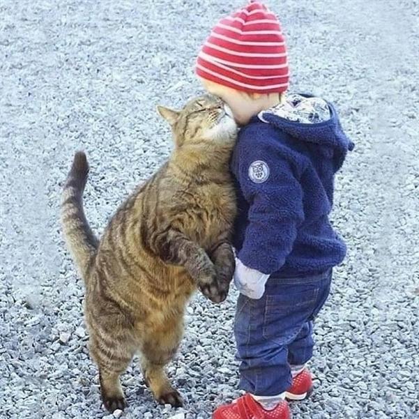 день кота