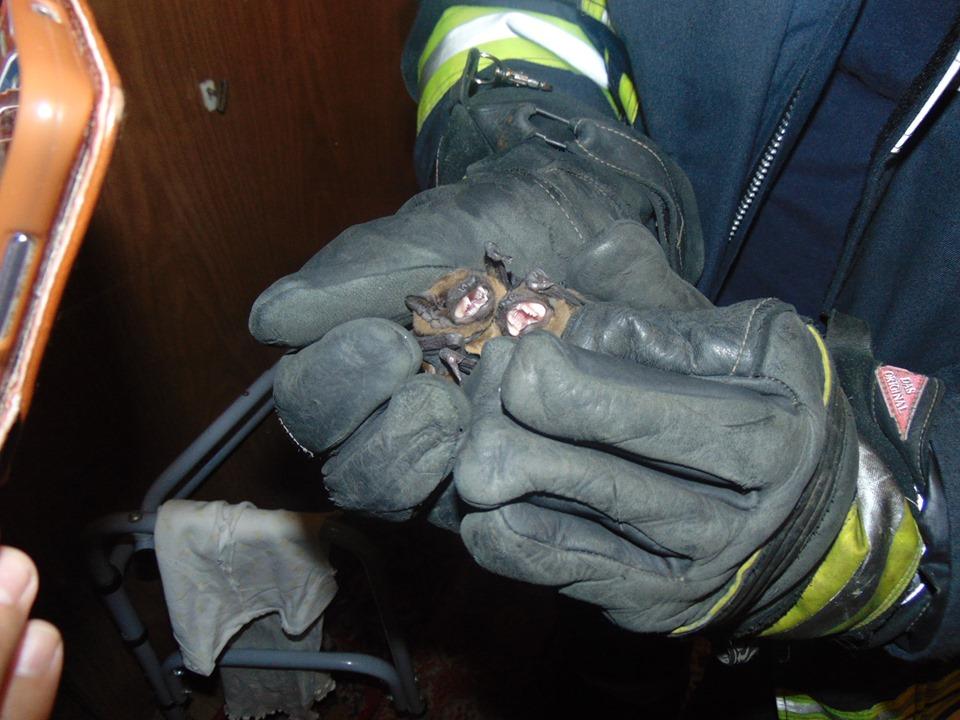луганская область_летучие мыши